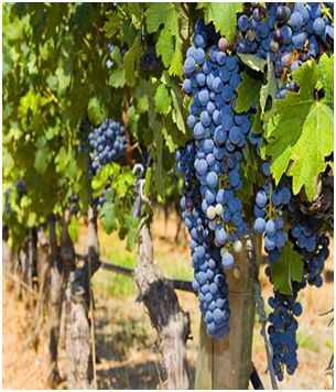 Malibu Winery Tours